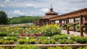 2017 Metrolina Greenhouses Field Trial Results