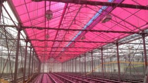 Smart-Magenta-Greenhouse