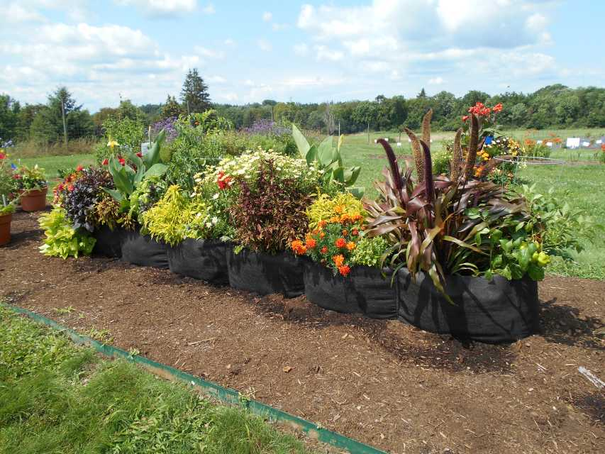 Smart Pot XL Bag Bed at Cornell University Floriculture Field Day