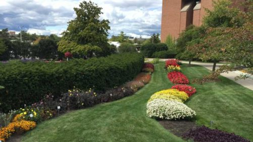 What You Can Learn at the Michigan Greenhouse Growers Expo
