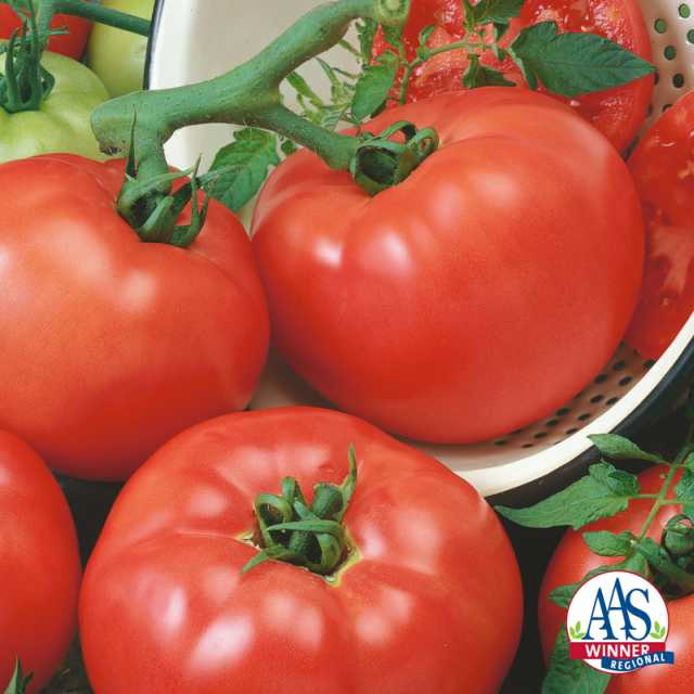 Tomato 'Chef's Choice Red' (Seeds by Design) summer vegetable trials