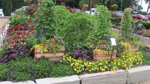 How Young's Plant Farm Uses Its Trial Gardens to Engage Consumers