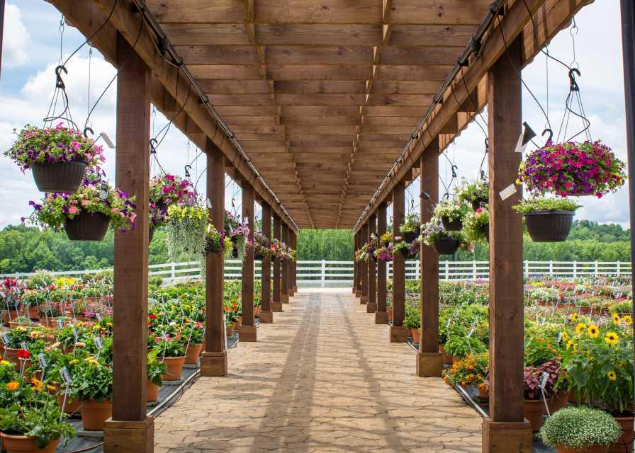 Metrolina Greenhouses pergola