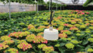 Monitoring the plant canopy for temperature