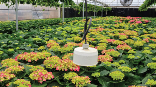 Infrared Thermometers for Monitoring  Plant and Substrate Temperatures
