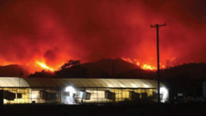 Southern California Wildfires Narrowly Miss Most Grower Operations