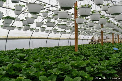 How To Make Sure Your Greenhouse Can Withstand Heavy Snow