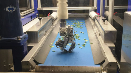 Evaluating Robotic Transplanters for Plant Cuttings