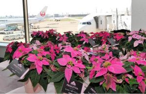 Japan-Airlines-princettia