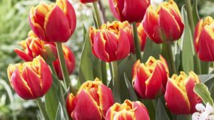 """How You Can Participate in Promoting National Garden Bureau's """"Year of the"""" Crops"""