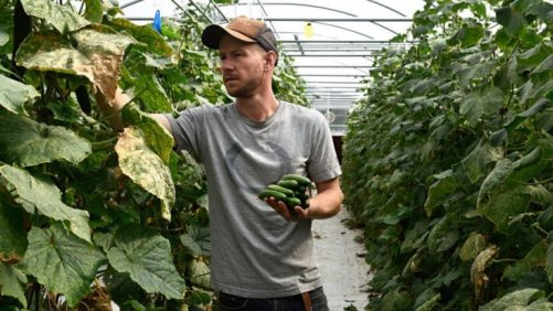 New Report Shows Older Growers Outnumber Younger Growers by a Six To One Margin