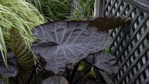 20 Colorful Foliage and Tropical Plants for Garden Interest