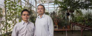 Colorado-Greenhouse-Lighting-Research