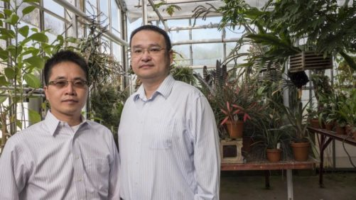 New Tech Could Lead to More Efficient Use of Light in the Greenhouse