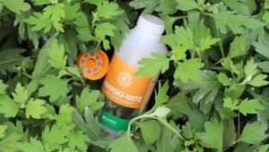 Dummen-Orange-Koppert-GreenGuard-Program