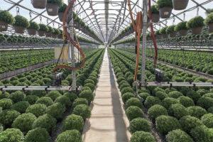 Irrigation-Lines