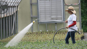How Clean Is Your Greenhouse Irrigation System?