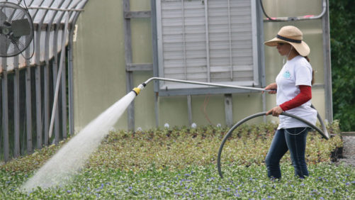 Why Your Irrigation Water Affects Your Media pH