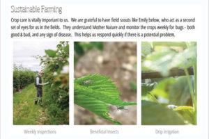 Krause-Berry-Farms-Marketing