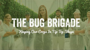 NatureFresh-Farms-Bug-Brigade-feature