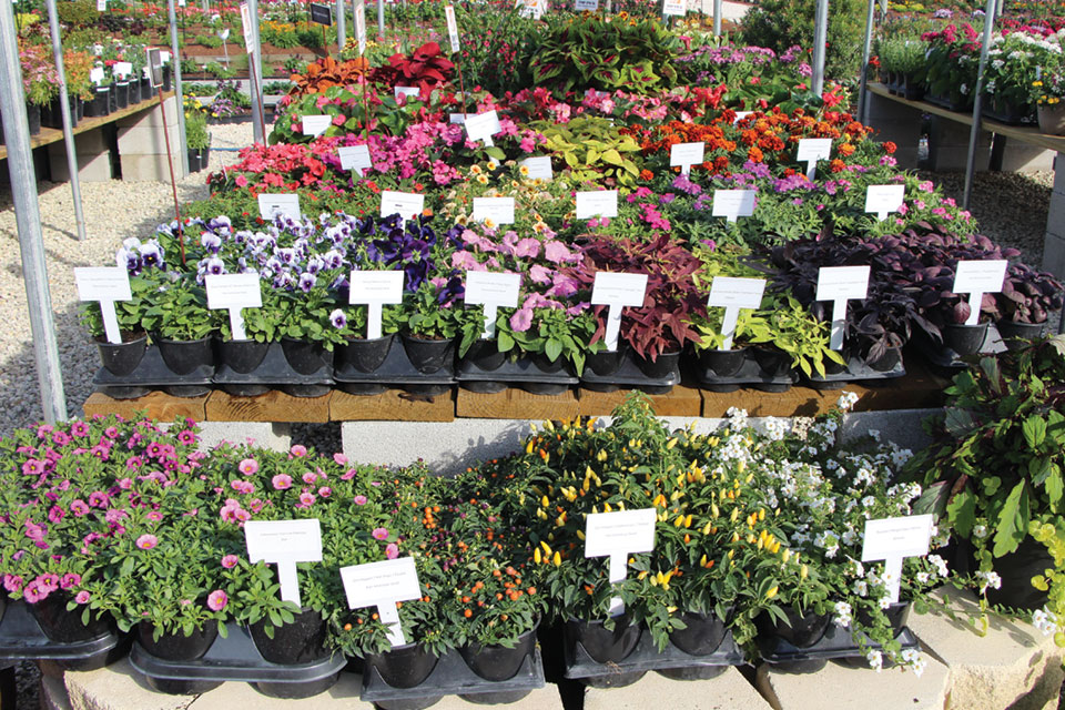 New Plant Display at Retail plant pricing