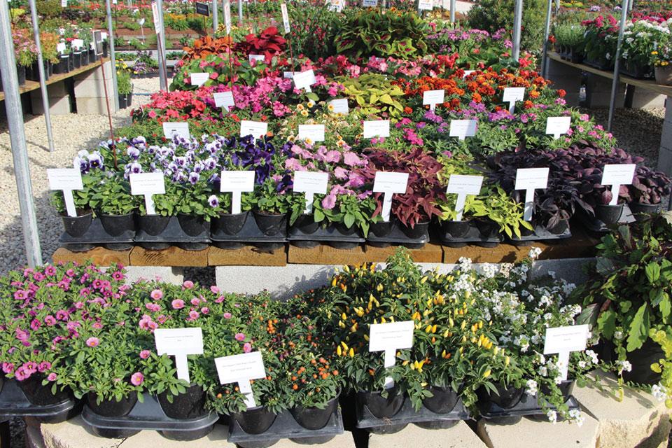 New-Plant-Display-at-Retail