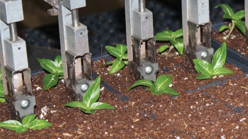 New Greenhouse Transplanters Aim for Improved Accuracy, Flexibility