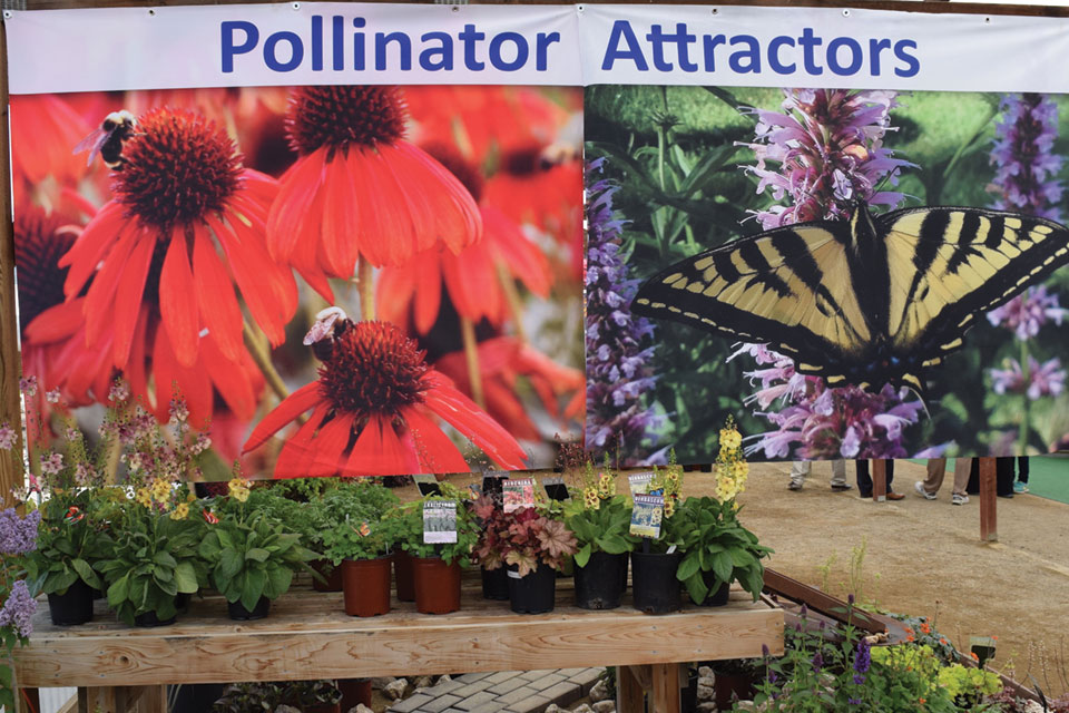 Pollinator-garden-at-Terra-Nova