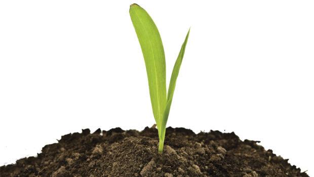 Soil-pH feature