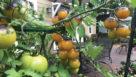 Take-2-Veggie-Combo-Burpee-Seed