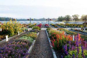 Youngs-Plant-Farm-Southern-Garden-Tour