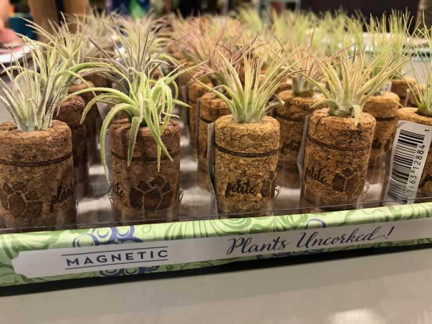 Wine Cork Magnet Planters (ArizonaEast, LLC)