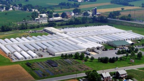 How Green Leaf Plants Continues to Thrive in the Young Plant Market