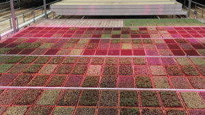 New Light Management System Aims for Consistent Plant Production