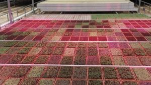 Greenbelt-Microgreens-Heliospectra-HelioCORE-feature