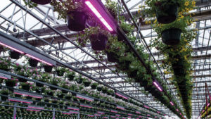 How You Can Run Your Business More Efficiently with LED Solutions