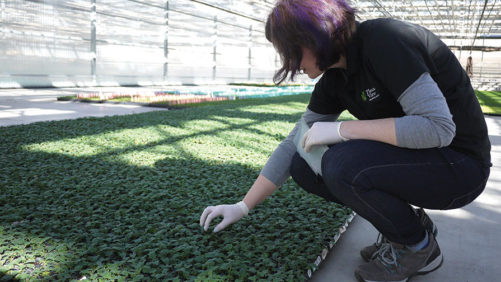 How to Keep Your Greenhouse Crop Free of Disease