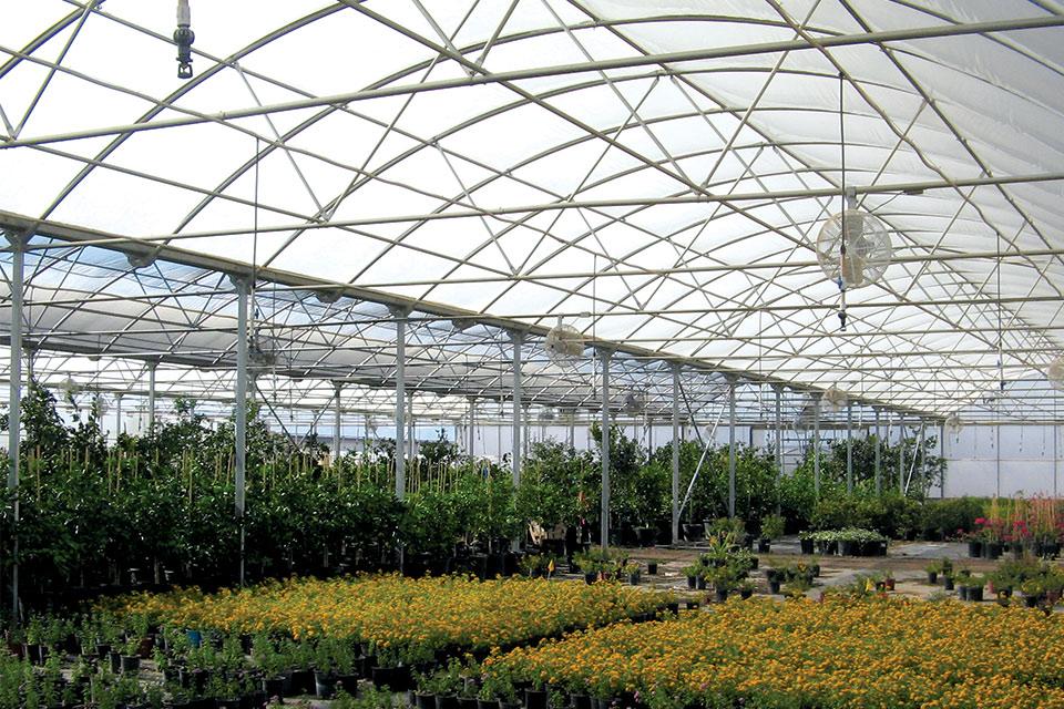Stuppy-Rainbow-Super-Stuppy greenhouse structures