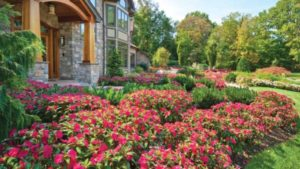 What's New with SunPatiens®?