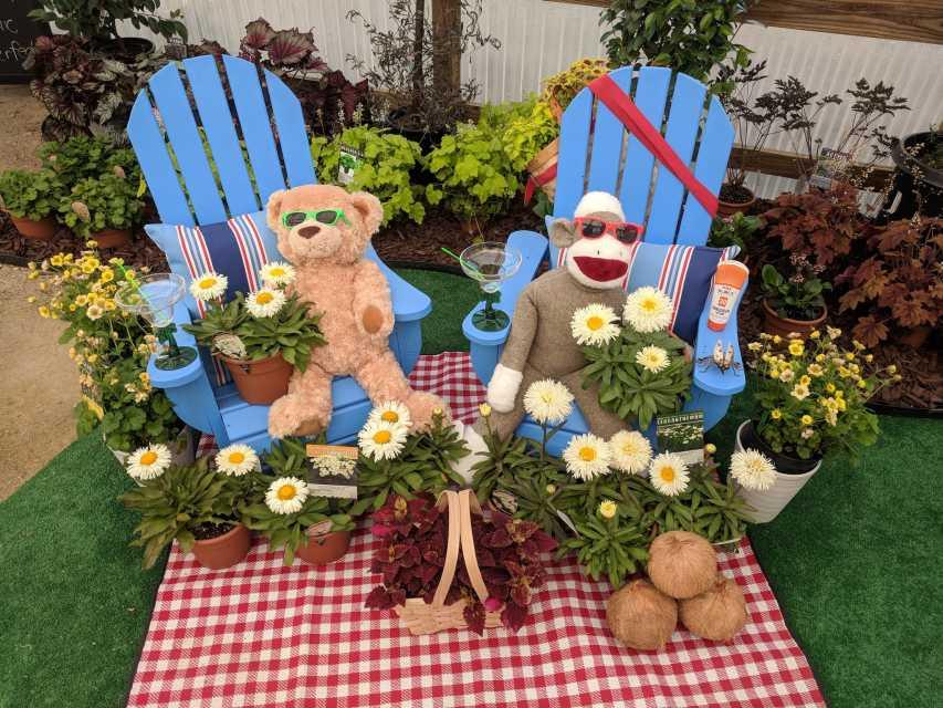 Adorable-and-Coconut-Leucanthemum-Terra-Nova-Nurseries