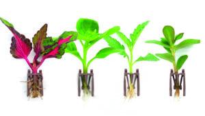 Dümmen Orange Debuts New Rooting Technology