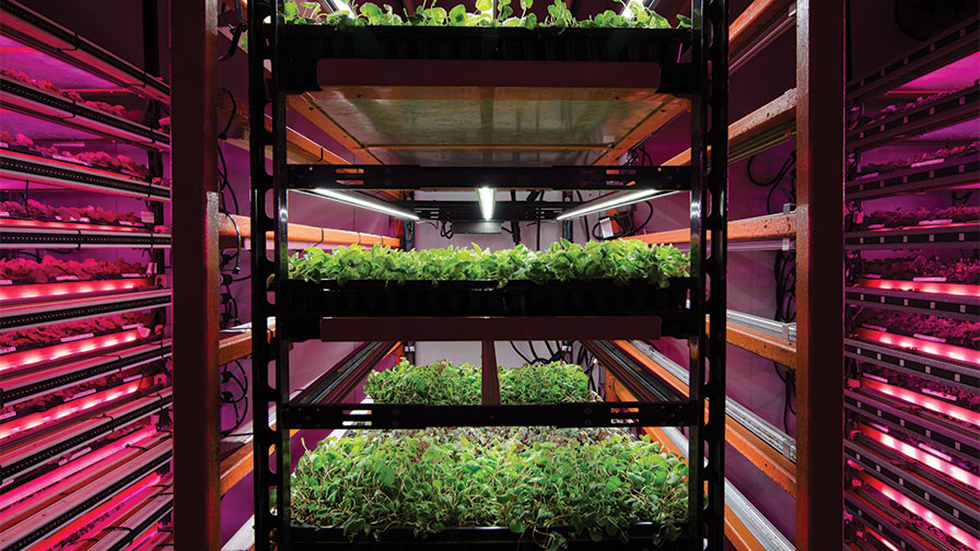 A Look Beyond The Hype Of Vertical Farming Greenhouse Grower