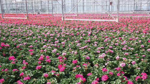 How Plant Growth Regulator Suppliers Are Continuing to Make Improvements