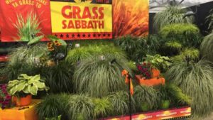 California Spring Trials 2018: New Intros from Syngenta Flowers, Hishtil, Jaldety, Cohen Propagators, Bailey Nurseries, and More