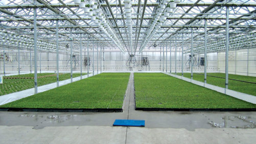 Five Keys to Accurate Greenhouse Production Costing