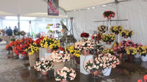 California Spring Trials 2018: Stand-Out New Plants from Dümmen Orange, Westhoff, Beekenkamp, and Plug Connection