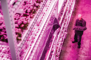 Philips-Lighting-at-GreenSense-Farms