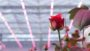Philips-Lighting-rose-toplighting-recipe