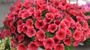 Armitage Scholarship Winner Weighs in on Plant Breeding Innovation