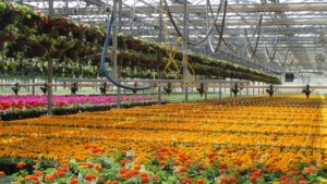 Color Spot Nurseries Files for Bankruptcy